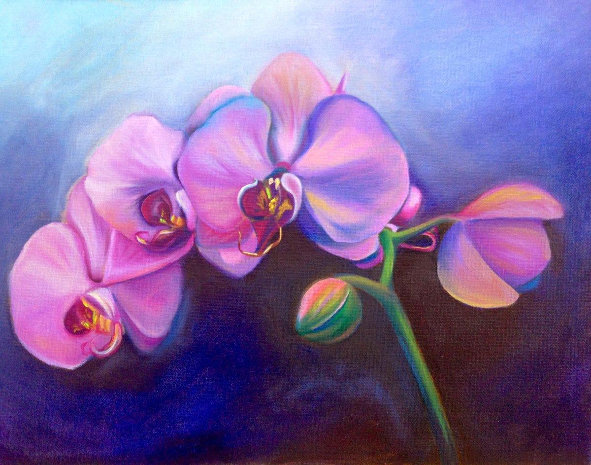 рисунки красивых орхидей систему учета анализа