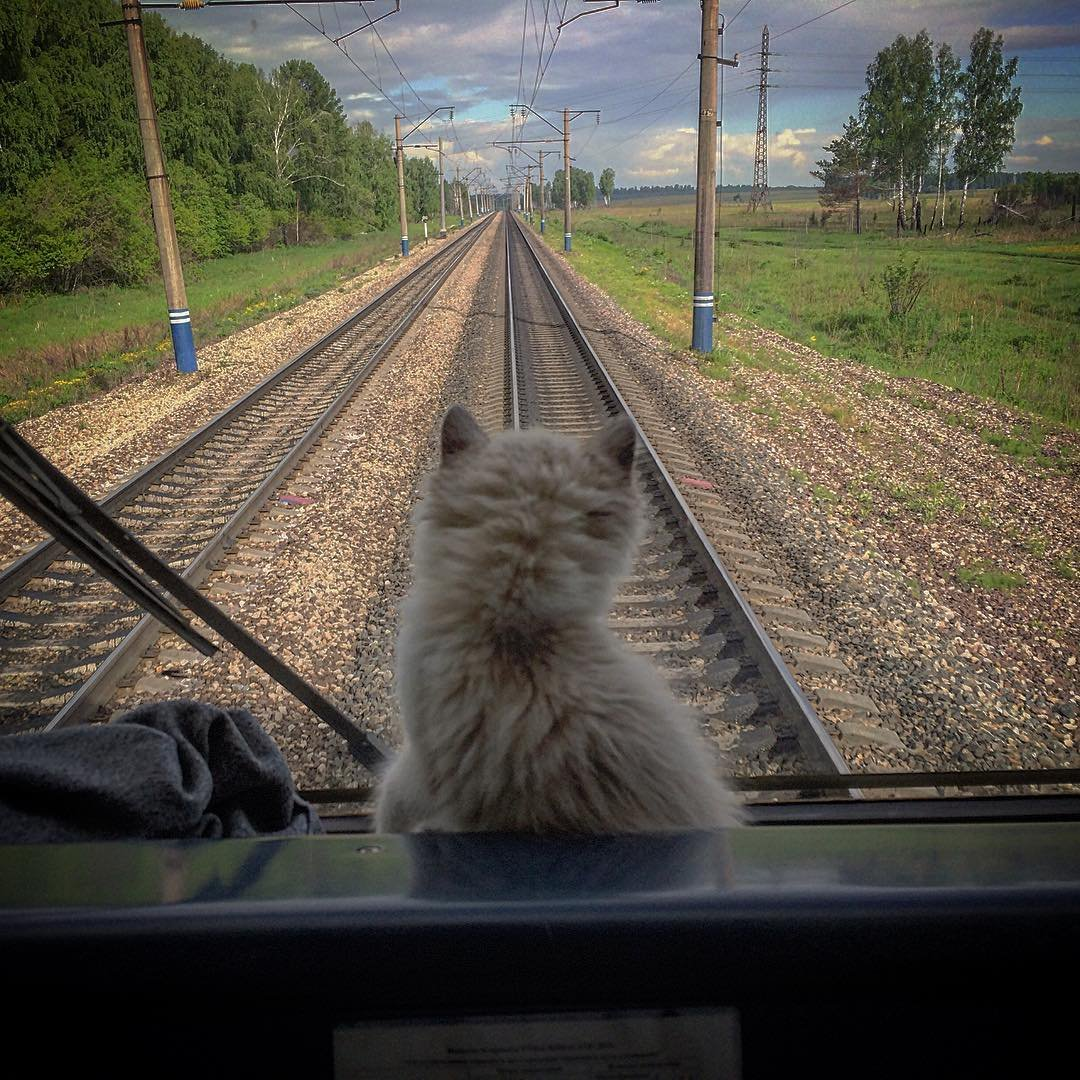 металла удачной дороги домой картинки на поезде вместе обтянуть