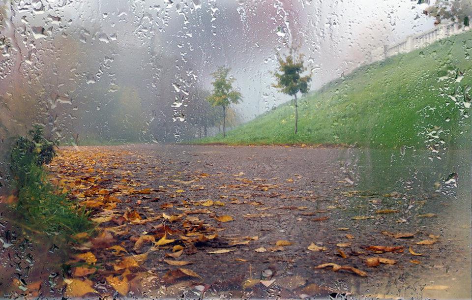 Восемь месяцев, осень фото красивые природа дождь