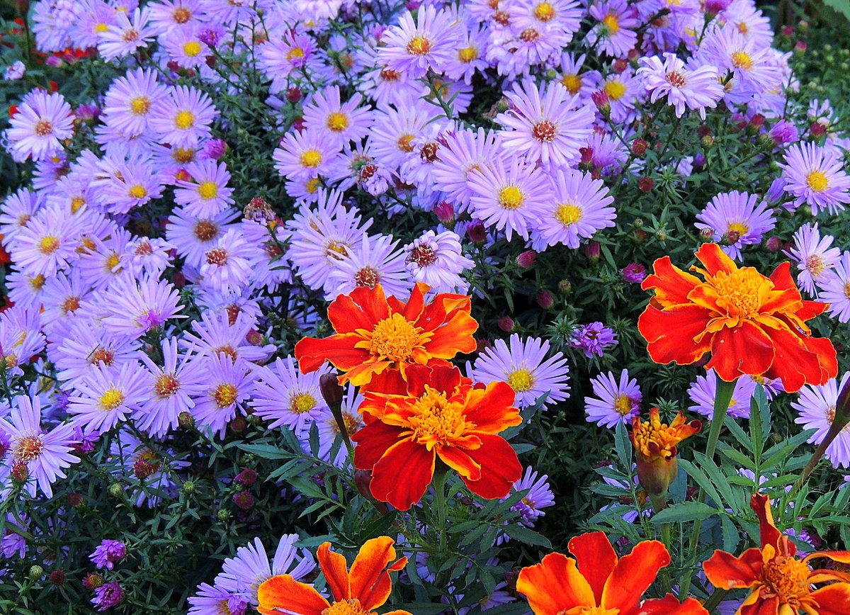 один важнейших картинки цветы городские цветы судью челябинской