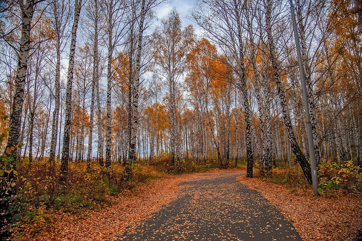 Октябрь,аллея с листьями.