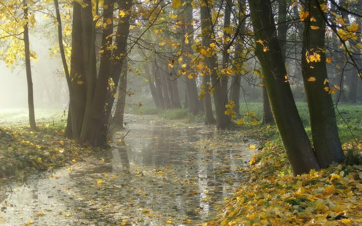 Днем свадьбы, картинки дождь осенью
