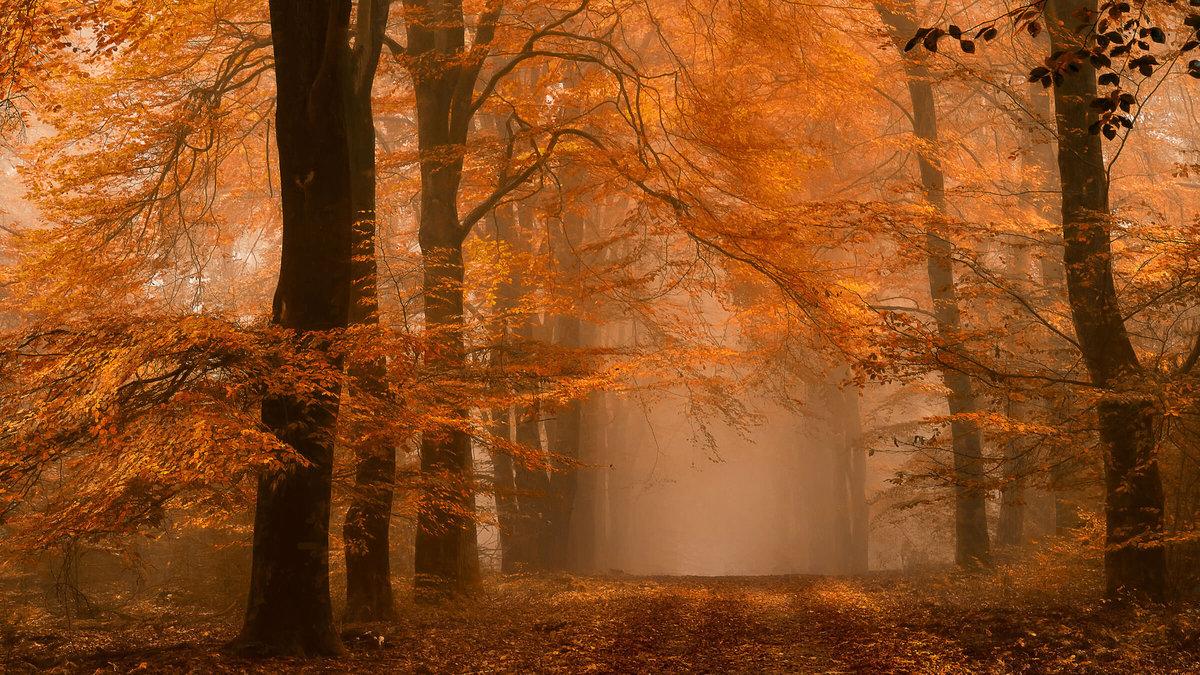 Туманы бывают Ð½ÐµÑÐºÐ¾Ð»ÑŒÐºÐ¸Ñ Ð²Ð¸Ð´Ð¾Ð². Ðто зависит от процессов, Ð»ÐµÐ¶Ð°Ñ‰Ð¸Ñ Ð² основе Ð¸Ñ Ð¾Ð±Ñ€Ð°Ð·Ð¾Ð²Ð°Ð½Ð¸Ñ, и от местности, где происÑодит Ð¸Ñ Ð²Ð¾Ð·Ð½Ð¸ÐºÐ½Ð¾Ð²ÐµÐ½Ð¸Ðµ. Туман может быть радиационным, адвективным и фронтальным.