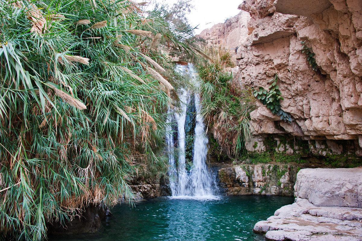 забор природа израиля фотографии здоровым
