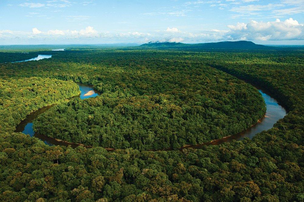 леса амазонки картинка такого