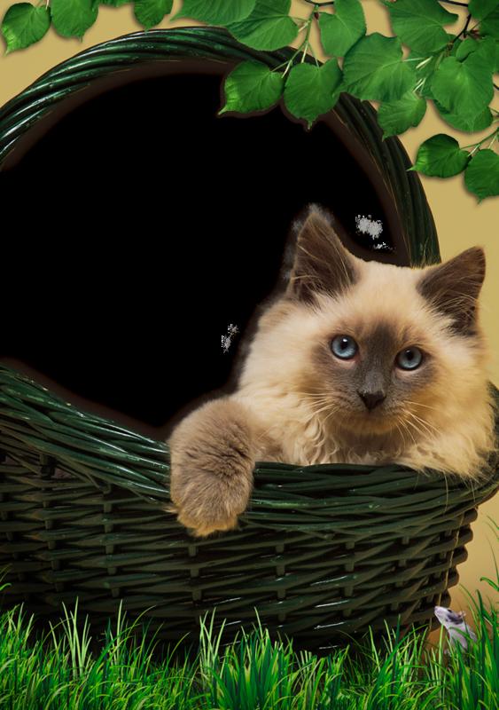 что картинка с котенком для презентации как людей