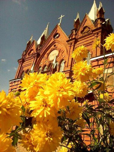 цветы золотые шары фото рудбекия