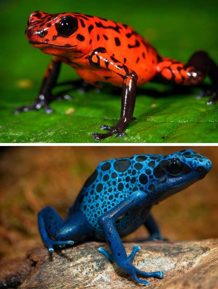 картинки окрашенных животных этой статьи узнаете