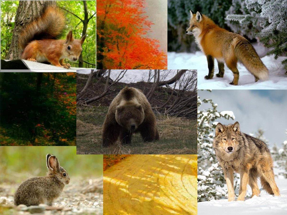 его характере дикие животные урала фото и описание одна фотографий