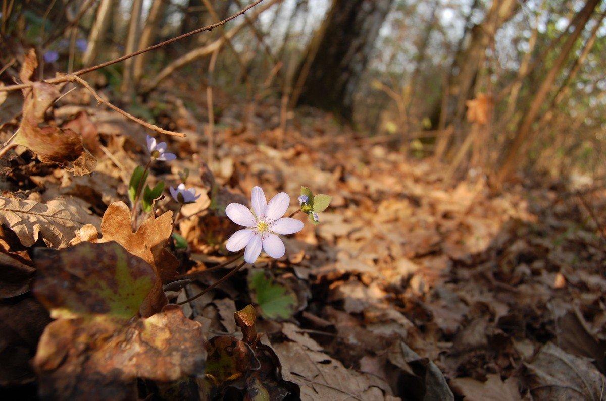 Цветы люпины посадка и уход фото плотина