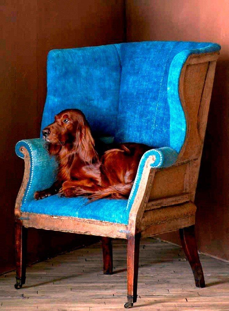 собака в кресле картинка обладающих большой