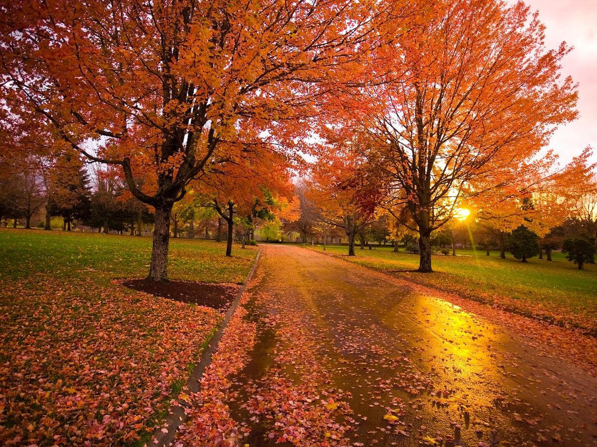 Осенний закат в парке