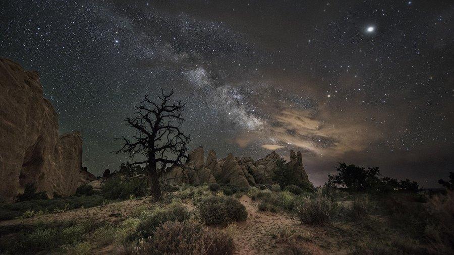 деревья на скале ночью