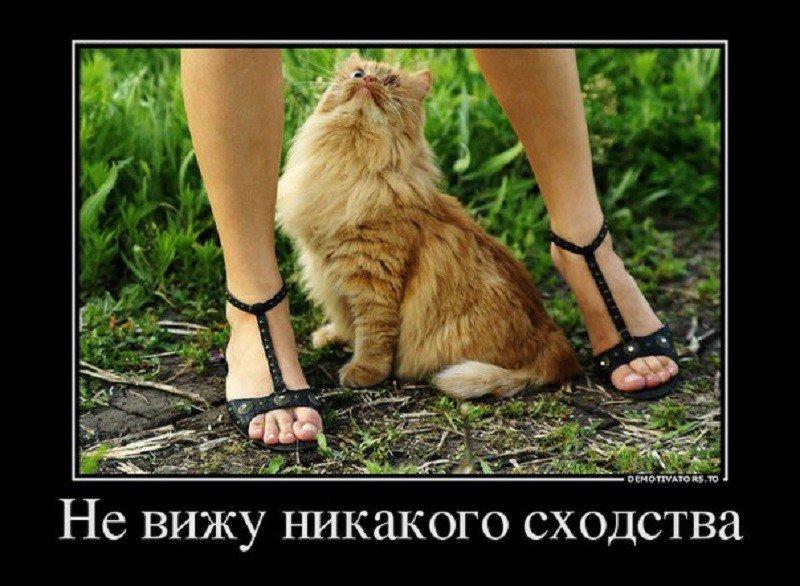 Прикольные картинки с надписями про ноги