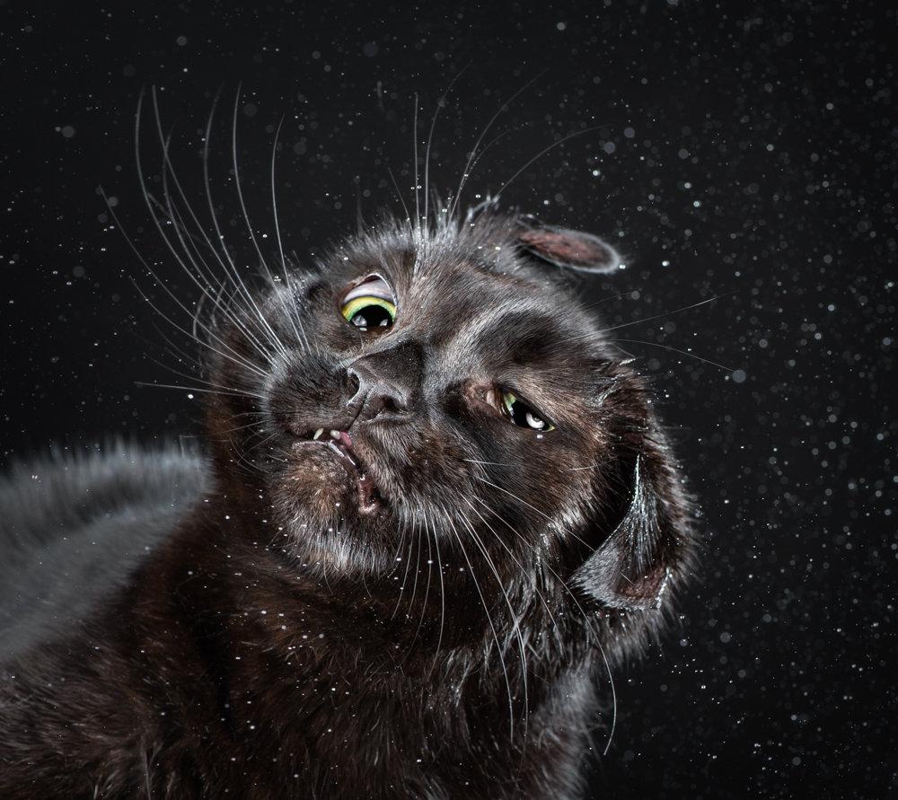 Прикольные картинки кошачьих