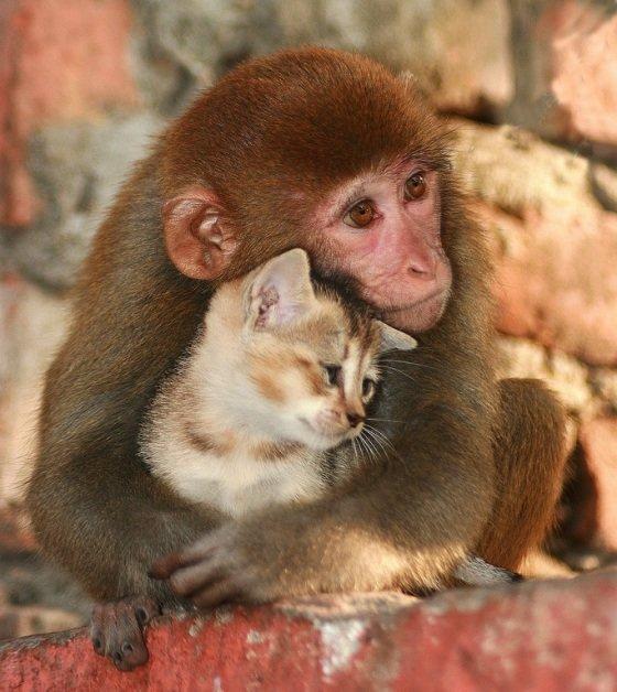 Надписью вступил, котенок с обезьянкой картинки
