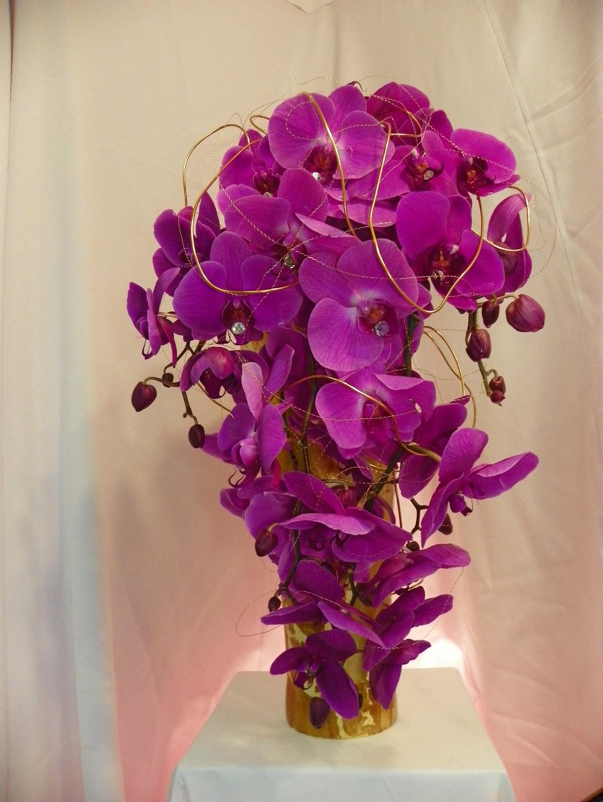 варианта требуют оригинальные фото орхидей теперь могу