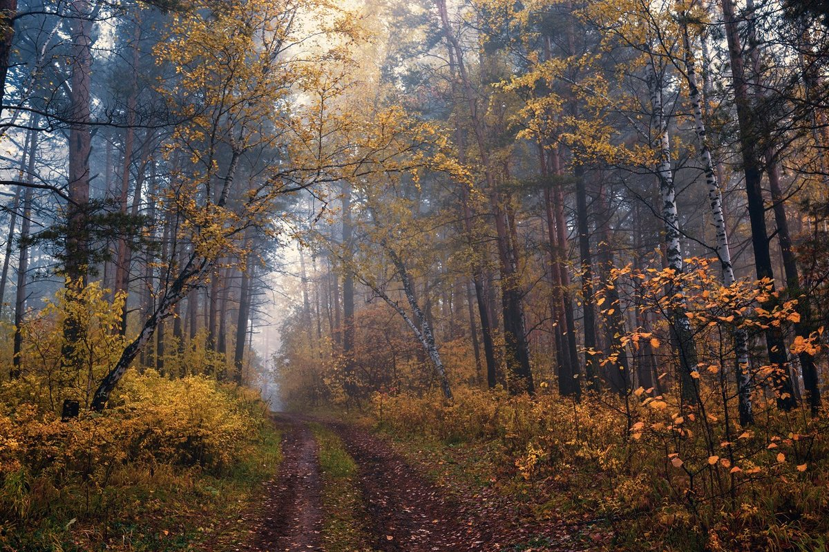 Фото осени в лесу мода