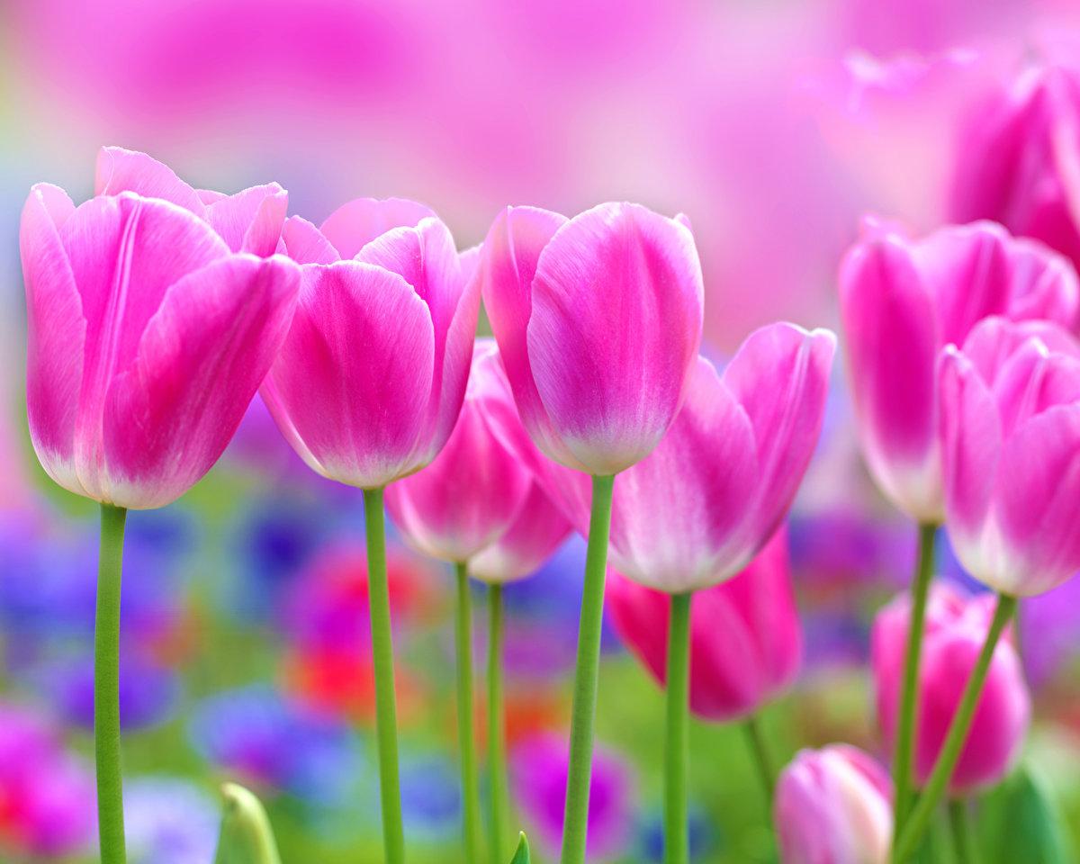 Картинки яркая весна, днем