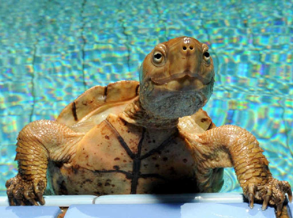 Картинка черепаха прикольные, сделать свадебную открытку
