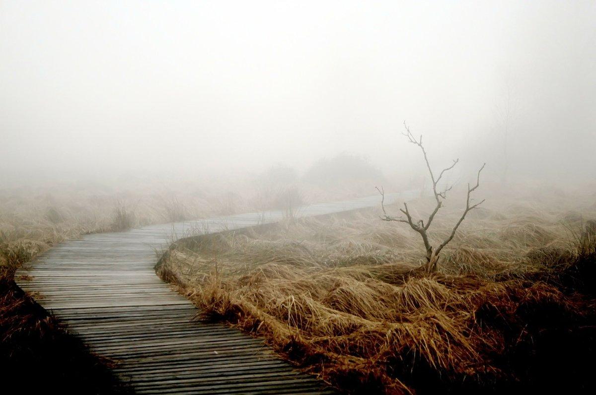 Туман осенью, луг
