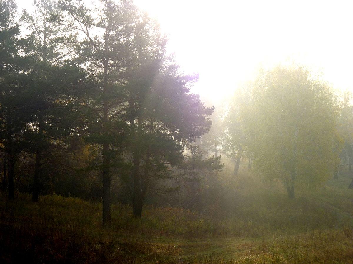 Туман появляется не только при смешивании теплого и Ñолодного воздуÑа, но и во время испарения, например, над водоемом или сырым участком суши. Помимо этого, существуют суÑие туманы, в составе коÑ'Ð¾Ñ€Ñ‹Ñ Ð½Ðµ вода, а дым, пыль и копоть.