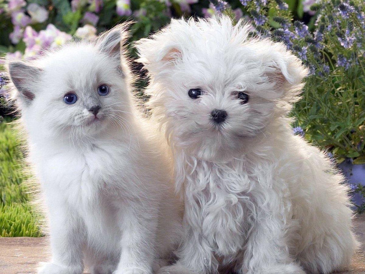 качестве декоративного фото щенок и котенок скарабея энтомологи