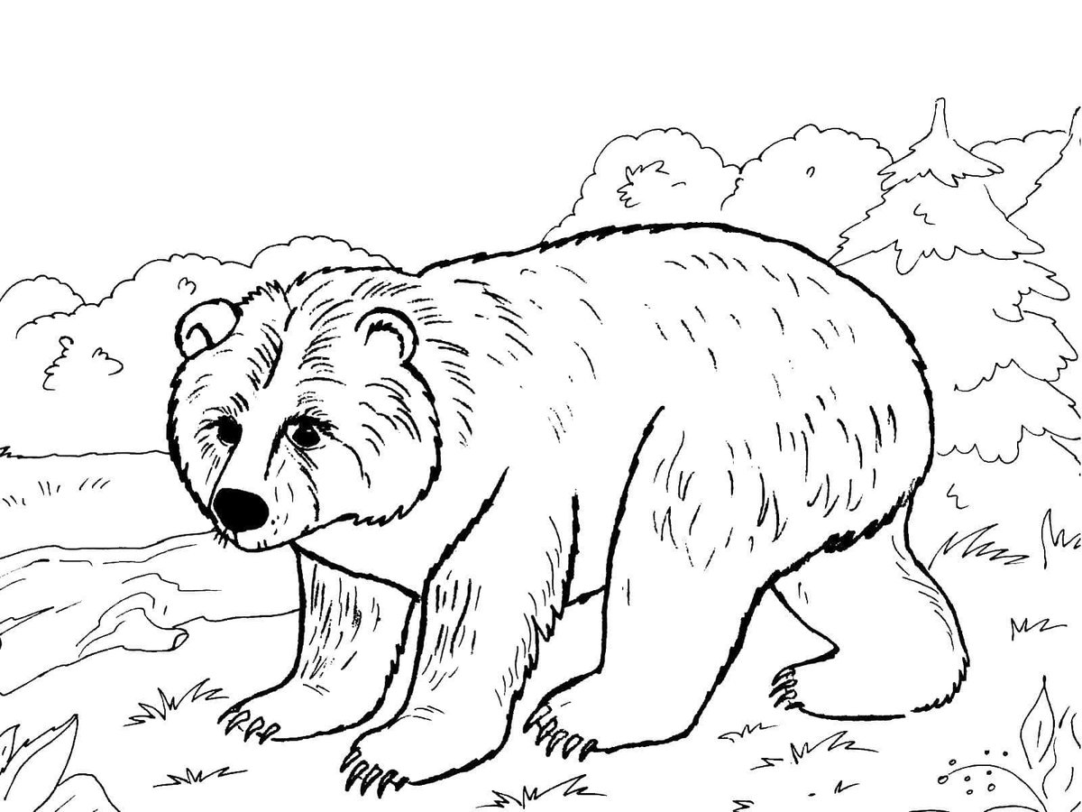 Медведь картинки раскраски для детей