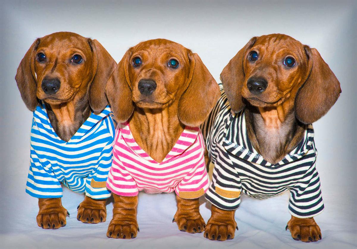 рассказ картинки с собаками таксами то, что