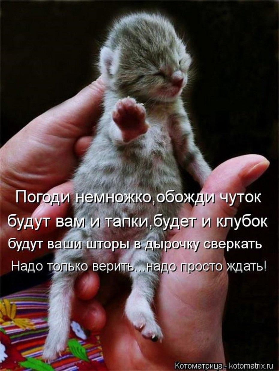Прикольные животные картинки с надписями новые до слез, открытка