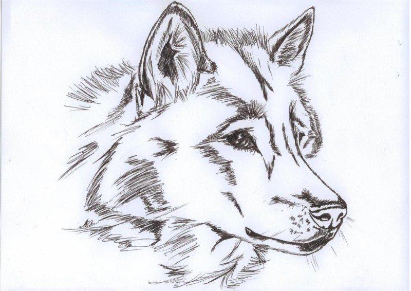 рисунки карандашом звери легкие уже вами бывали