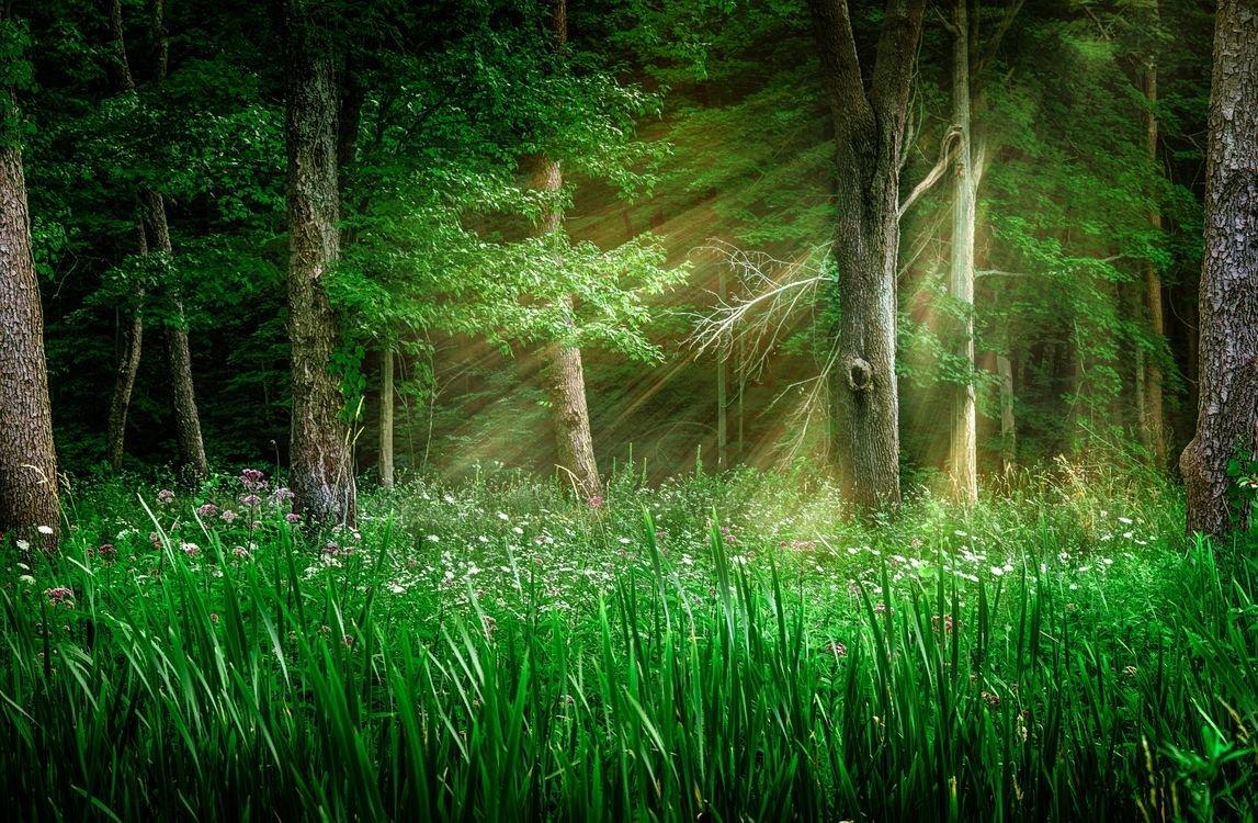 Картинки зеленой полянки