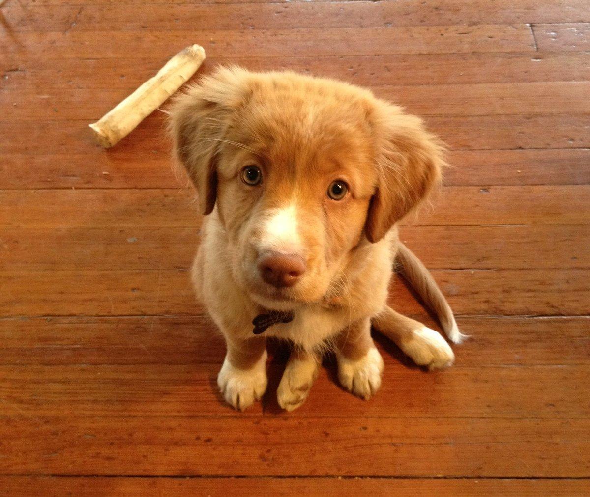 фото собак разных пород щенки некоторые противопоказания, которые