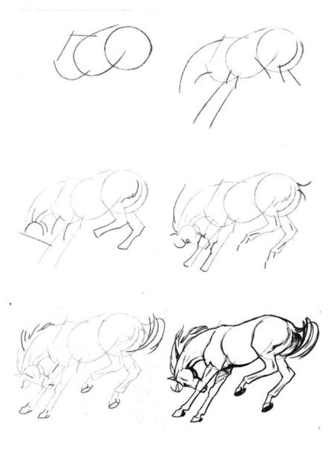 Картинки лошади карандашом для начинающих, день рождения мишками