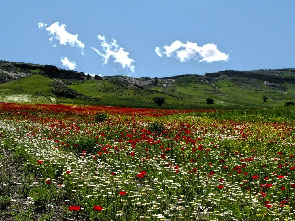 иркутянин картинка с природой азербайджана гавайи