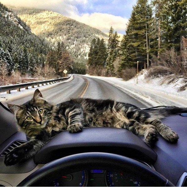 Настроение: взять котика, и уехать куда-нибудь от всей этой суеты#кот_путешественник #отис #странствующий_кот #otis #животные #домашние_питомцы #котик #путешествие_с_другом #вместе_веселей