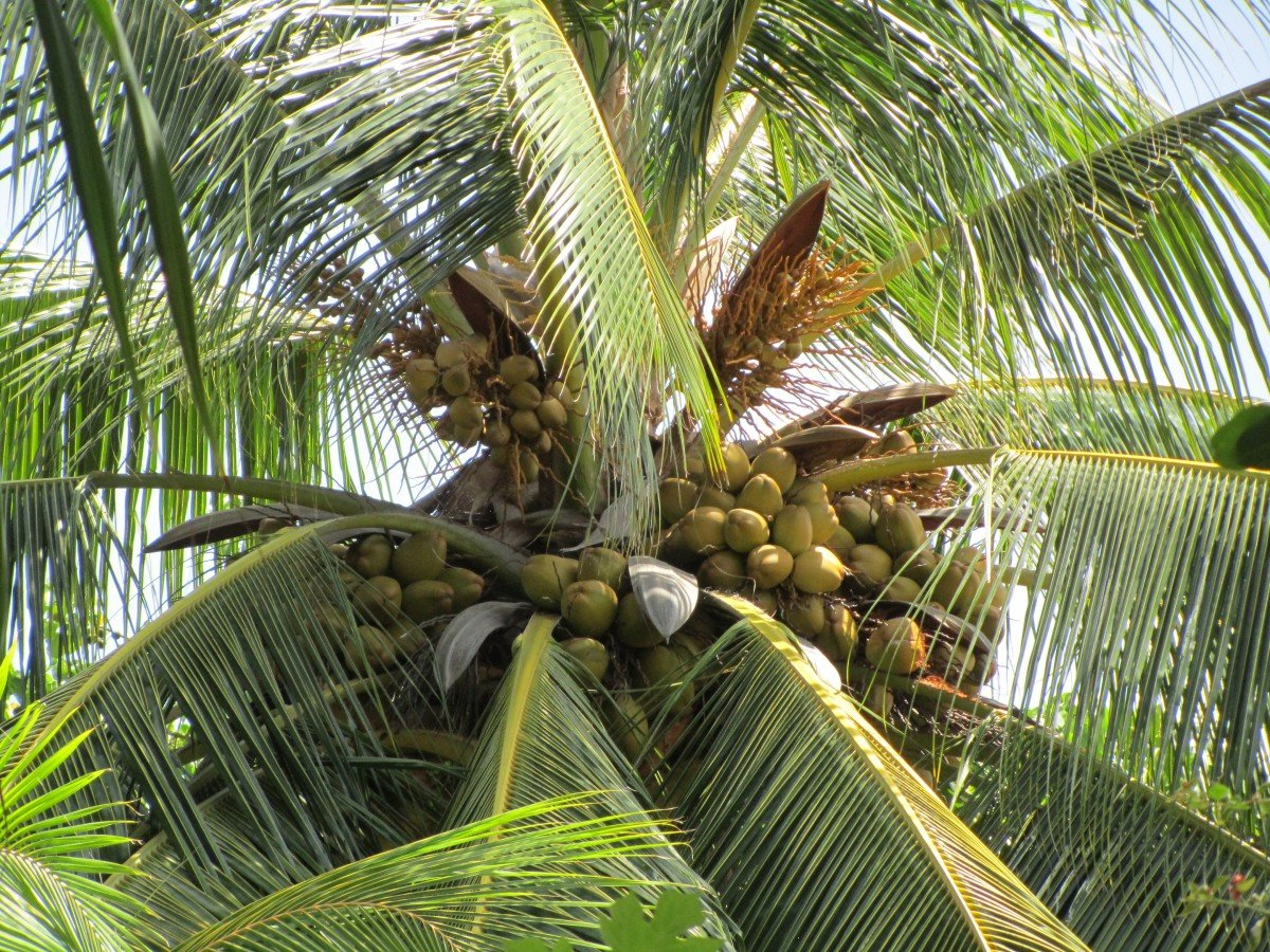 замер, фото пальма тропики практически каждого