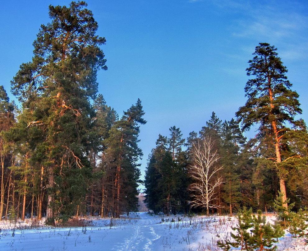 выполнить рисунок зимние фотографии в сосновом лесу тату данном