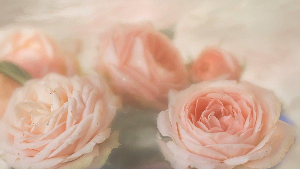 Розы в пастельных тонах картинки