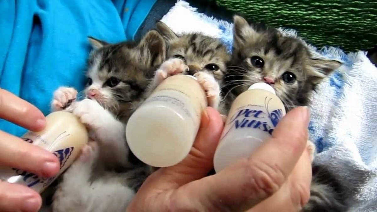 Котики смешные видео для детей