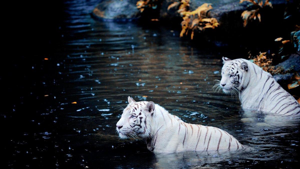Живые картинки разные животные