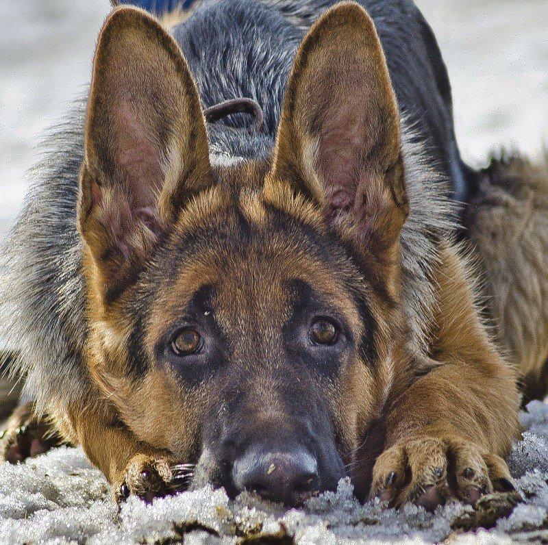 Картинки с брошенными собаками