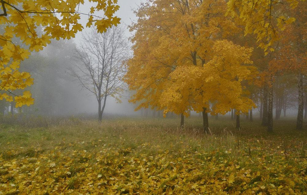 Осенний туман Геннадий Варжен