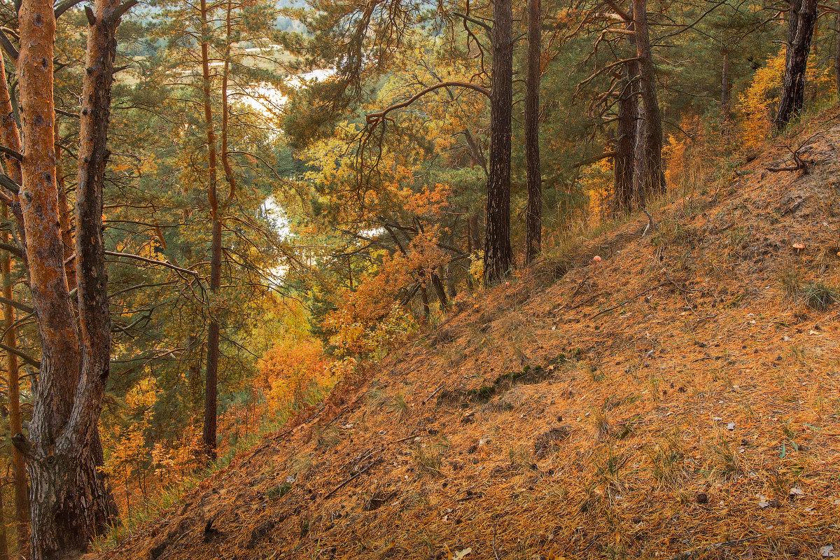 Картинки соснового бора осенью