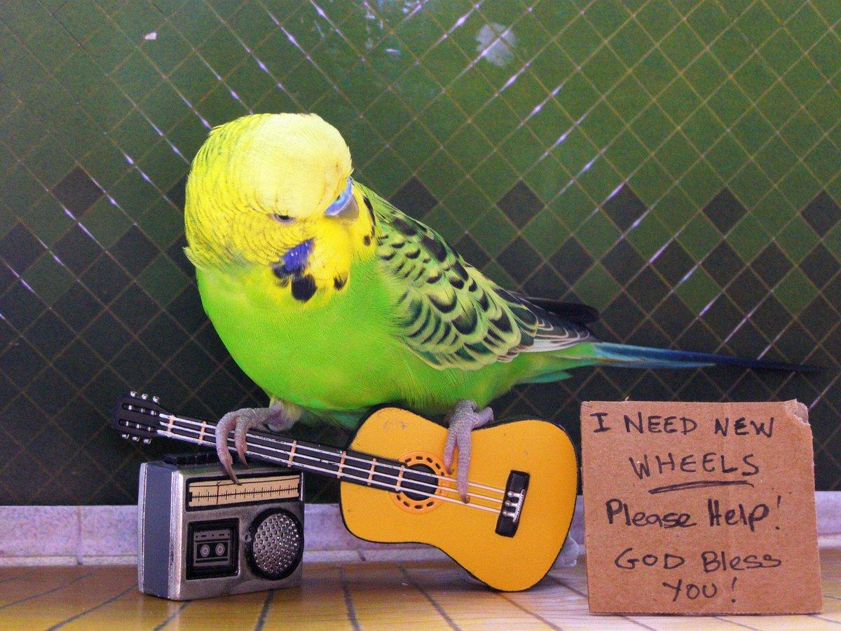 Попугай прикол картинки, открытки фото
