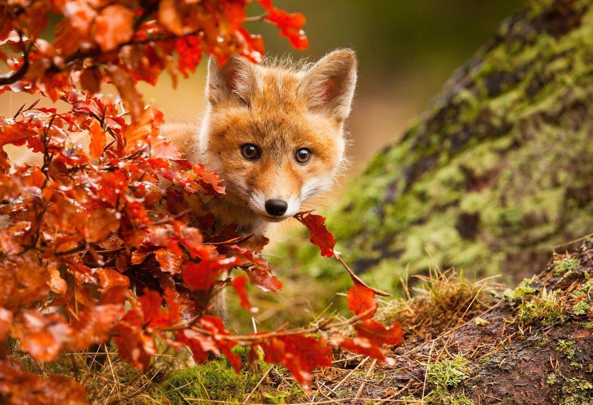 Высказывания, открытки животные осенью