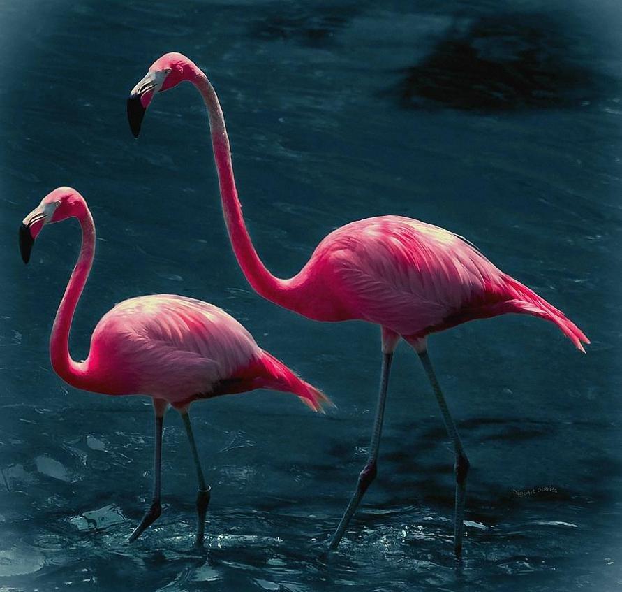 сделать брошь красивые картинки фламинго раньше меган увлекалась