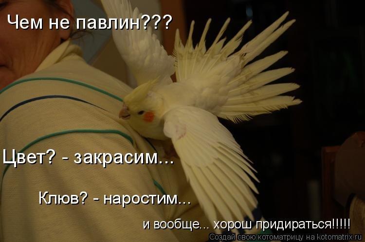 Смешные картинки про попугая с надписями, новым