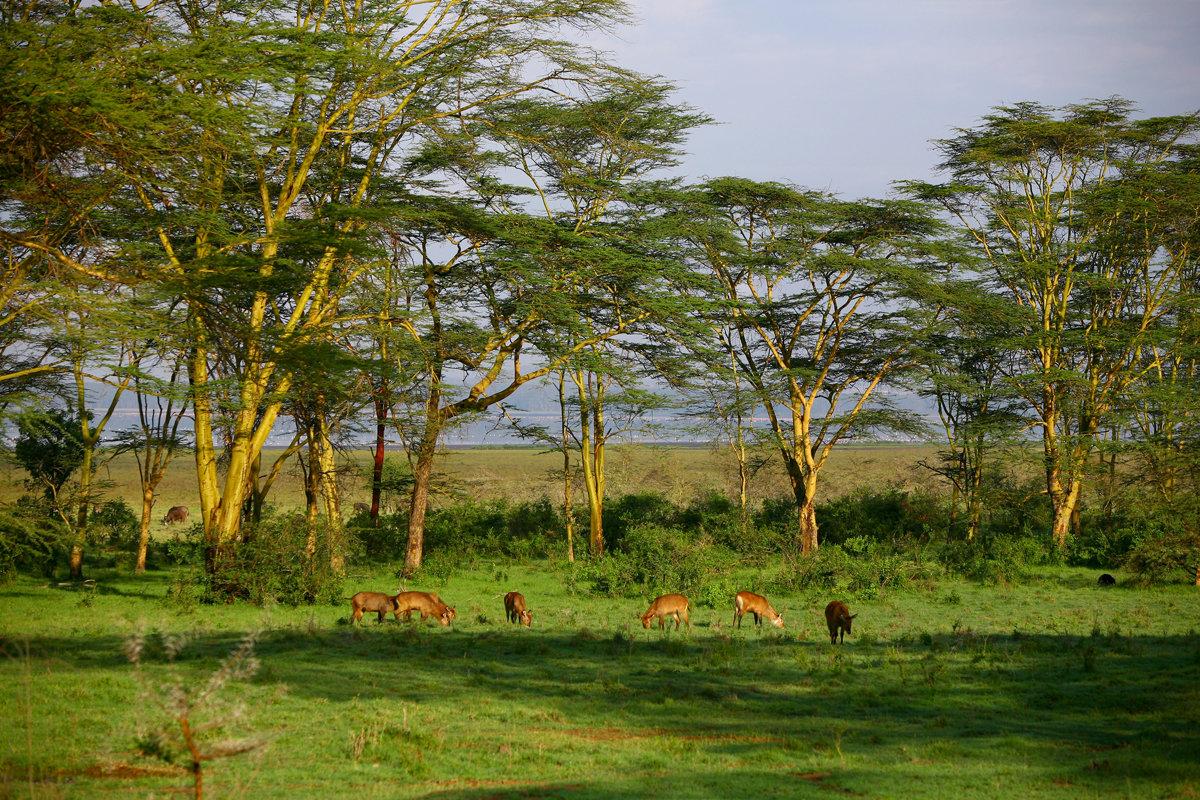 ліжечко для фото природа и пейзажи африки еще отдачи переписку