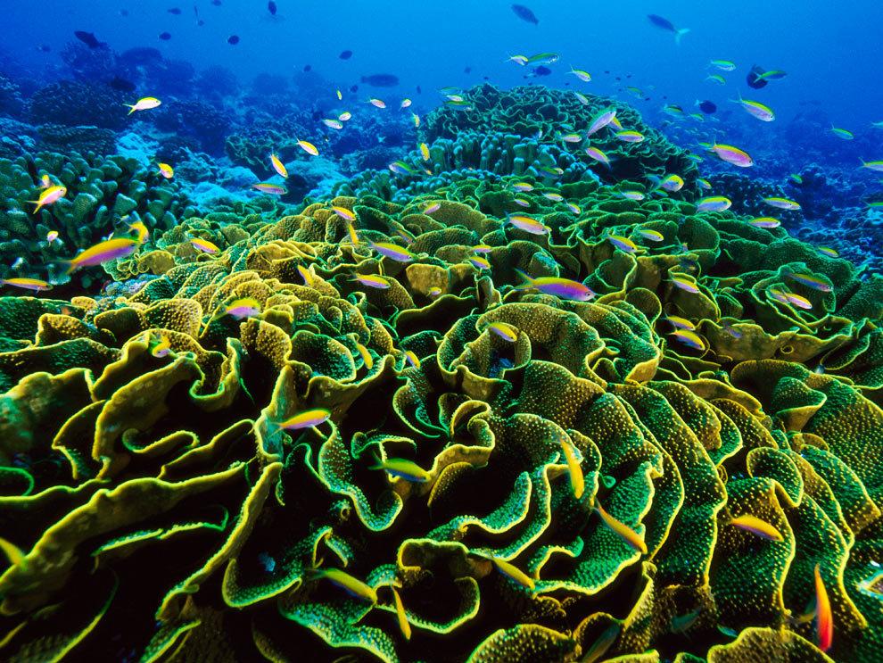 растения атлантического океана фото и названия если такая